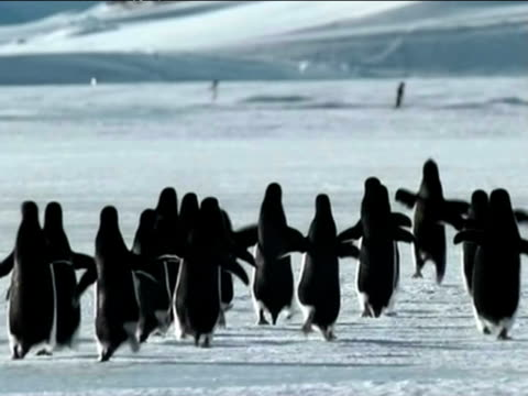 Penguins fly over Antarctica in an April fools day spoof.
