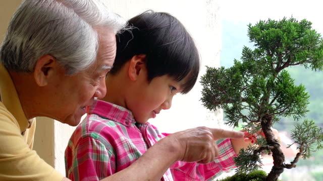 Penjing Großvater und Enkel Bansai