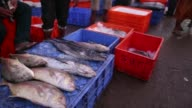 People browse and walk through the Margoa wholesale fish market at dawn in Margoa Goa India on Saturday Feb 8 Fish are displayed for sale Vendors...