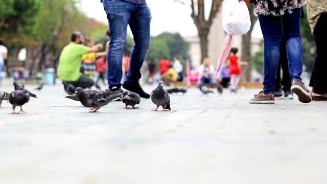HD: People feeding birds in Sultanahmet Square, Istanbul