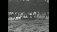 People move about in darkness / man in partial darkness rows boat on flood waters through partly submerged trees / small group of people in partial...