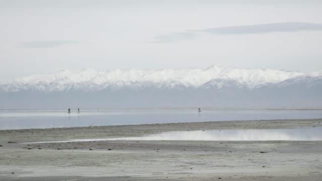 People paddleboard in Great Salt Lake, wide shot