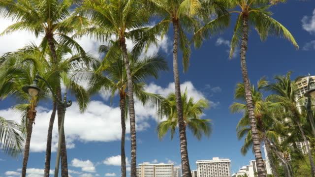 People relax and suntan on the coast in Hawaii