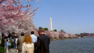 People strolling under cherry blossoms on bank of Tidal Basin with view of Washington Monument in background / Washington, DC