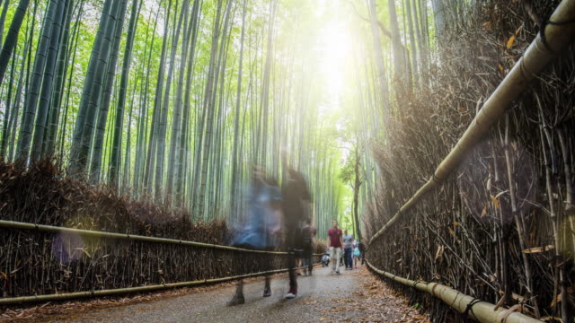People visiting the Bamboo Forest