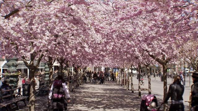 People walking in a flowery park Kungstradgarden Stockholm Sweden.