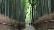 People walking through a large forest of Bamboos growing near Kyoto, Japan, Asia