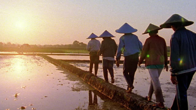 REAR VIEW 5 people with triangular hats walk on raised path thru swamped rice fields / Java, Indonesia