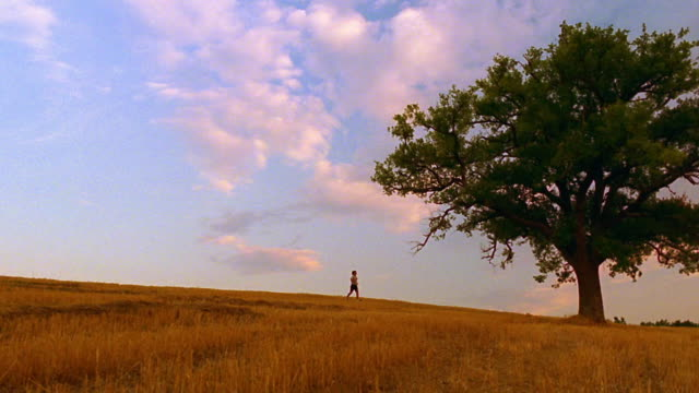 PAN person running in golden field towards tree / Spain