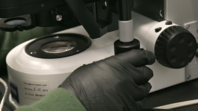 Person with latex gloves uses microscope, close up