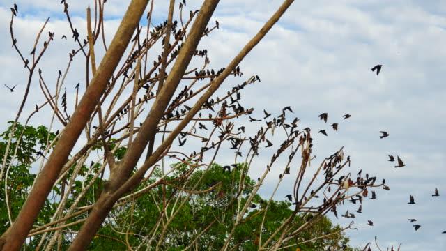 Peru, Amazon basin, lots of Martins leaving the tree, Pacaya Samiria National Reserve