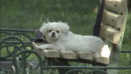 Pet dog sits on park bench, Beijing, China