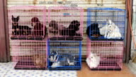 pet puppies in cages waiting to be sold