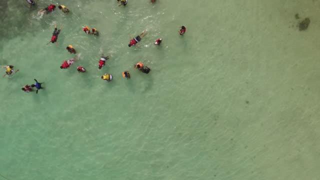 DJI Phantom 3 films group of people snorkeling on the beach while descending