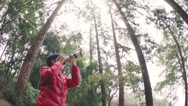 WS Photographer using mirrorless camera with telephoto lens taking photo in pine tree forest
