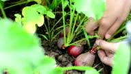 Pflücken Gemüse