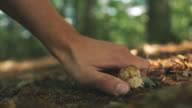 Picking Wild Mushrooms in Forest