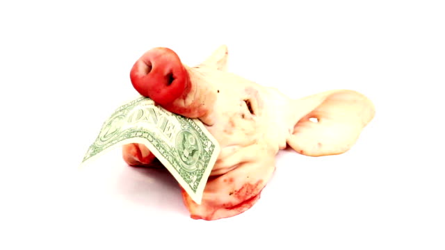 Pig head with one dollar in mouth