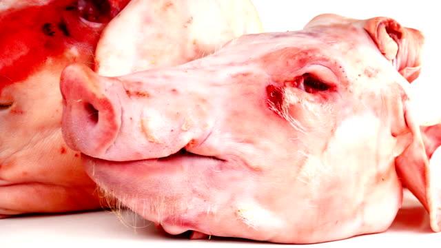 Pig Heads On White