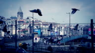 Pigeons in Istanbul