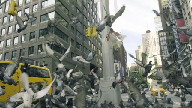 Pigeons in New York