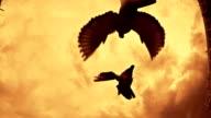 Pigeons. Slow motion.