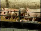 Pigs on the farm (Original PAL)