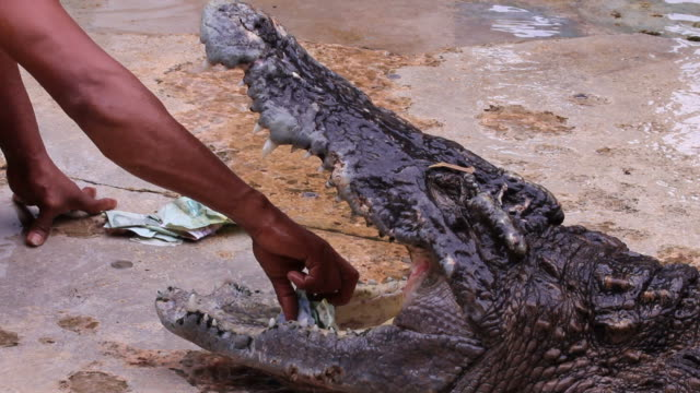 pikcing money from crocodile mouth