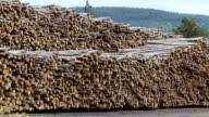 WS PAN ZO Pile of logs in rows / Near Williams Lake, British Columbia, Canada