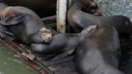 pile of sea lions sitting on dock, water below