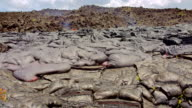 Pillow lava forming and flowing timelapse Day daytime Glowing Hot flow from Kilauea Active Volcano Puu Oo Vent Active Volcano Magma