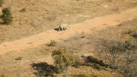 Pilot circling rhino running along dirt road from helicopter Rhino poaching is a major threat to the extinction of rhinos living in and around nature...