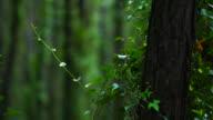 Pine forest, Dunas de Liencres Natural Park, Pielagos Municipality, Cantabria, Spain, Europe
