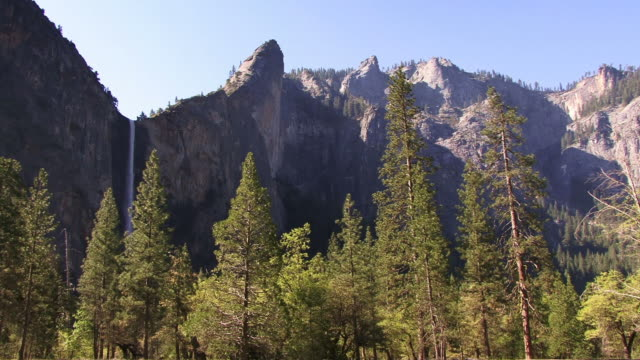 A pine forest nestled in a Yosemite canyon.