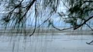 Pine leaf slider shot.