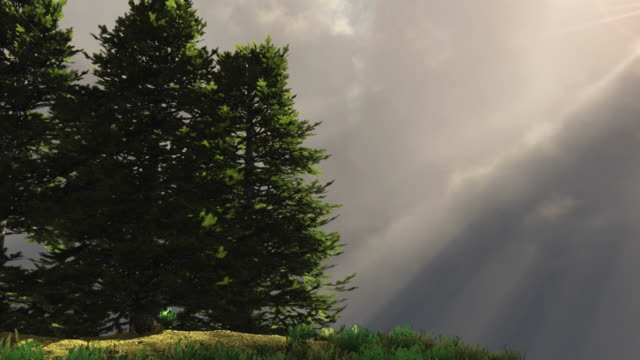 Pine trees on a hill with rays of light
