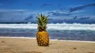 Pineapple Timelapse in Hawaii