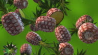 Pineapples Falling - Slow Motion