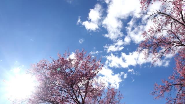 roze kersenbloesem bloemen