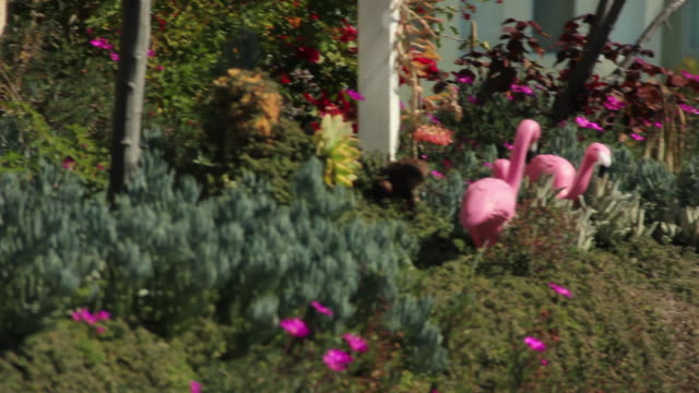 Pink Flamingos Outside of Apartment Complex