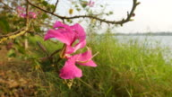 pink flower in purity in rural scene