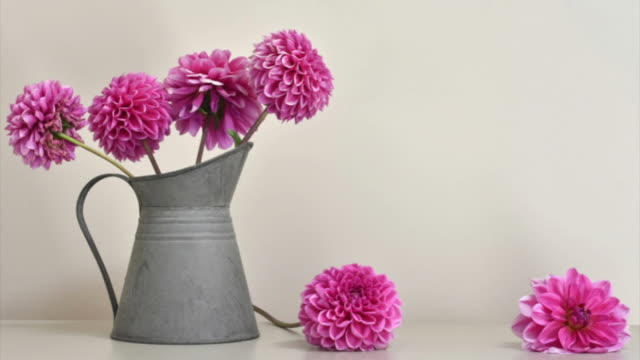 Pink Flower Stop Motion