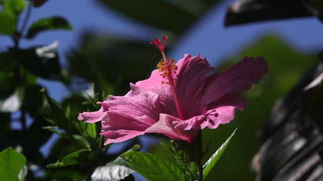 Pink Flower CU