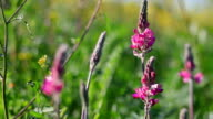 Pink flowers in lateral sliding movement