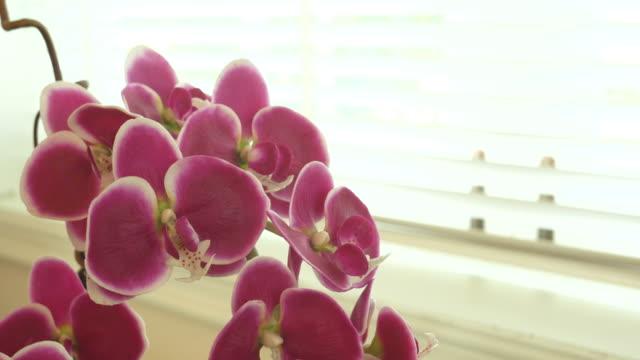 roze orchidee versieren in woonkamer