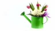 Pink Tulip arrangement in a green watering tin.