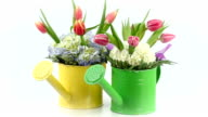 Pink Tulip arrangements in two separate watering tins.