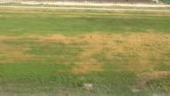 HD: Plane Landing