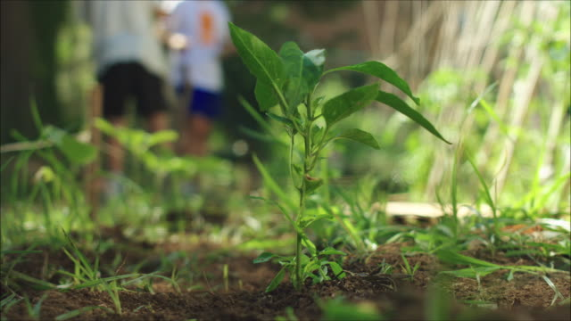 Plant in a vegetable urban garden patch. Close up with defocus background of farmers working.