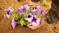 planting a new flower, gardening